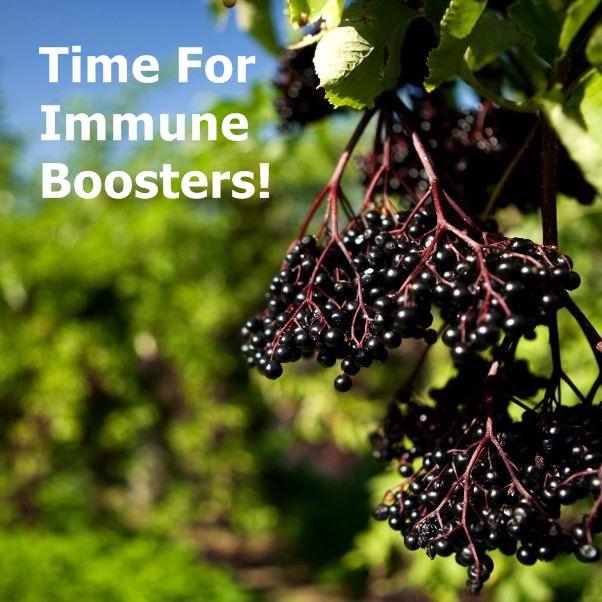 elderberry-immune-boosters-head-602x602